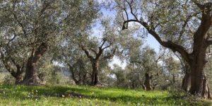 Strada dell'olio e del vino liguria