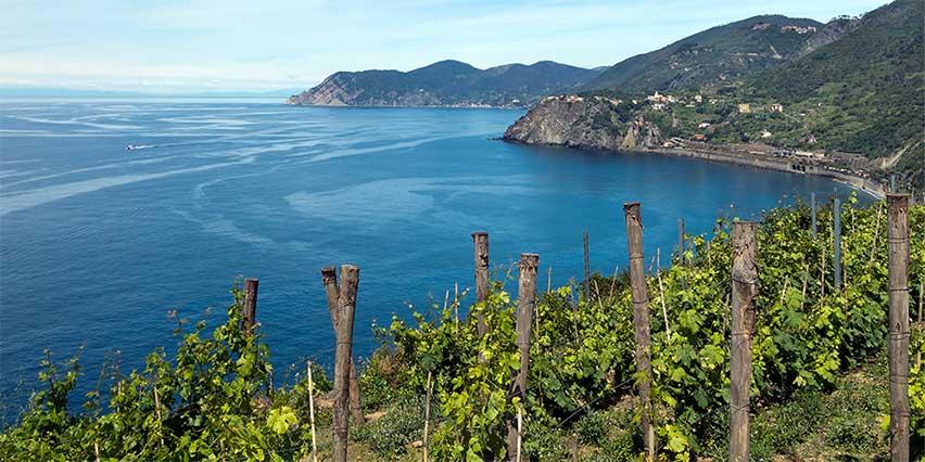 sentiero azzurro vigneti Corniglia