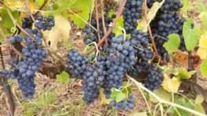 vini in val di vara evidenza