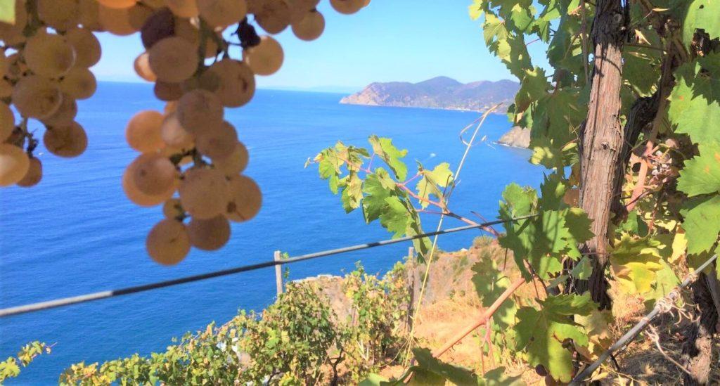 Le vigne del Corniolo