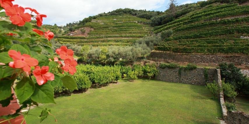 Buranco Monterosso