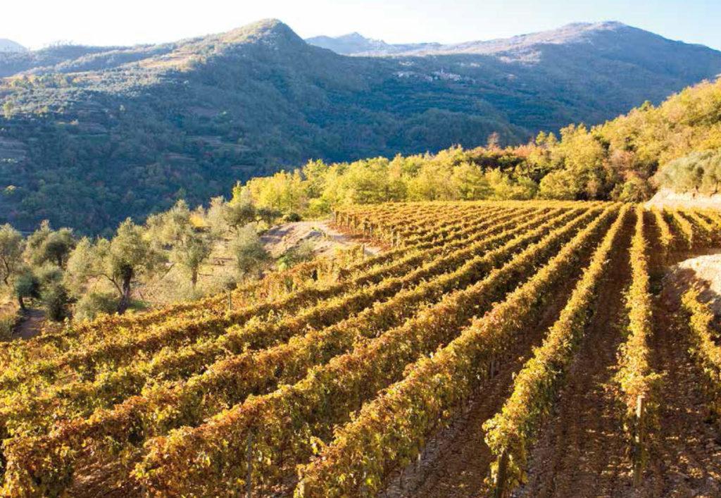 le vigne di Bio Vio