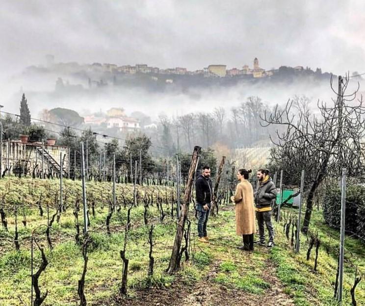 Uno scorcio delle vigne del Torchio a Castelnuovo Magra