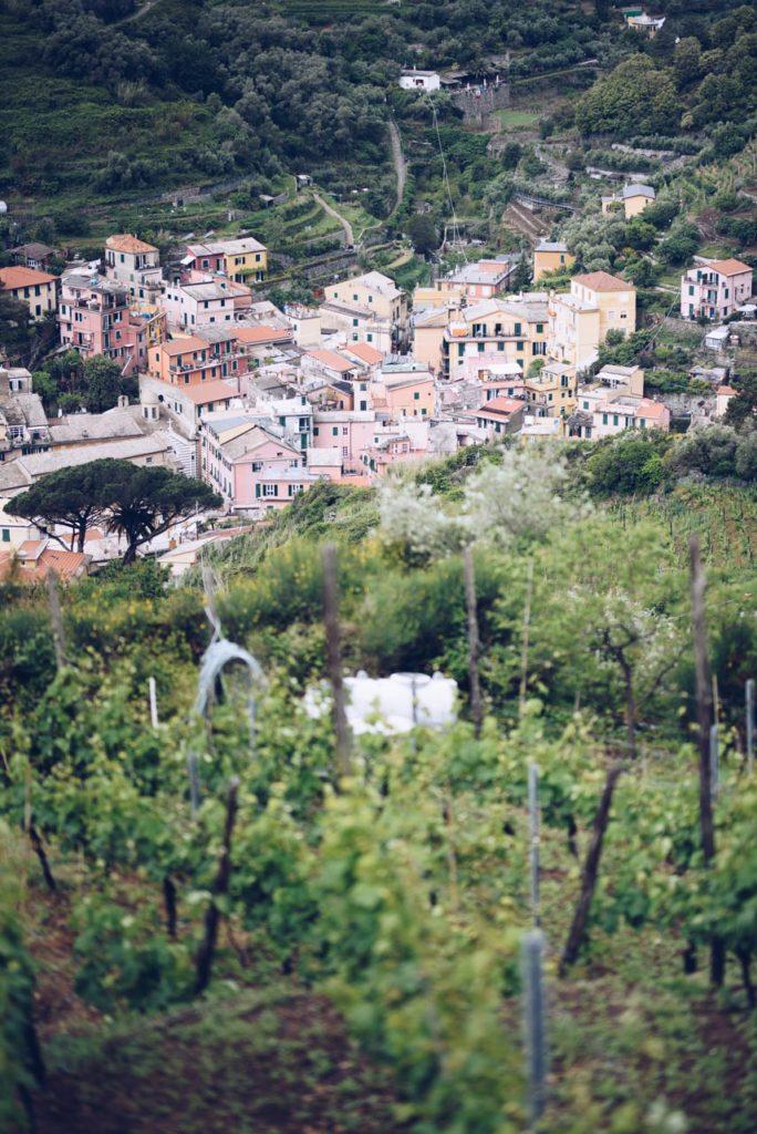 Uno scorcio di vigne a Monterosso, Cinque Terre