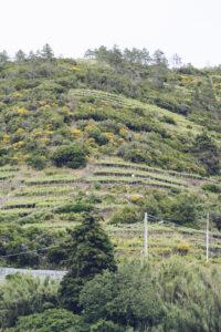 Terrazzamenti a Manarola, Cinque Terre